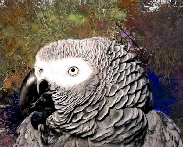 Digital Art - African Grey Parrot Portrait by Scott Wallace Digital Designs
