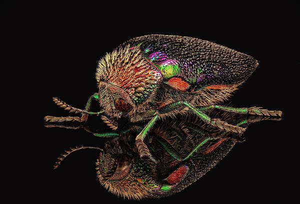 Photograph - African Jewel Beetle by Gary Shepard