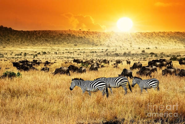 Group Wall Art - Photograph - African Landscape. Zebras Herd And by Oleg Znamenskiy