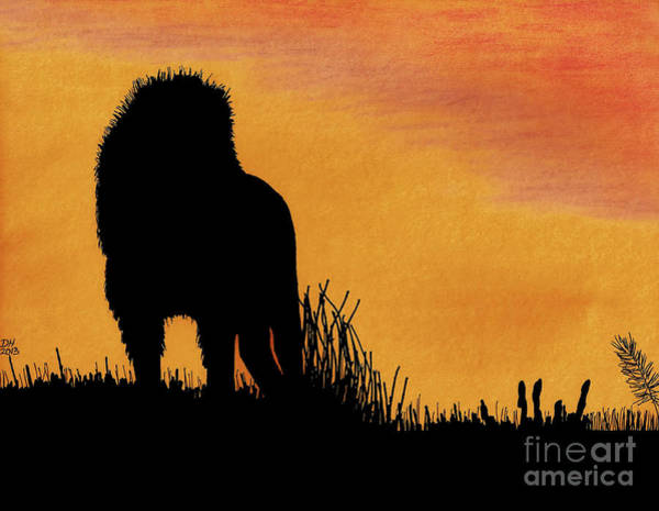 Drawing - African Lion Sunset by D Hackett