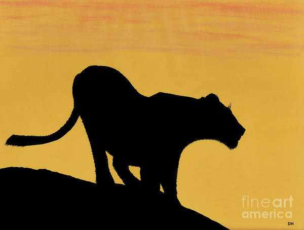 Drawing - African Lioness Sunset by D Hackett