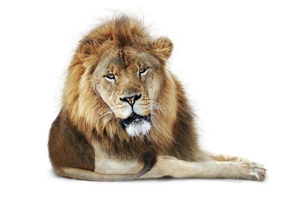 Photograph - African Male Lion Named Boboo by Susan Schmitz
