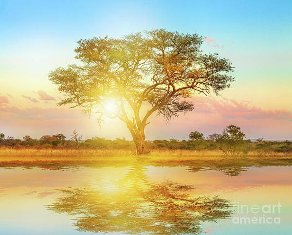 Photograph - African Savannah Landscape by Benny Marty