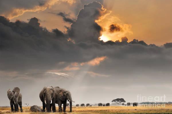 Dusk Wall Art - Photograph - African Sunset With Elephants by Oleg Znamenskiy