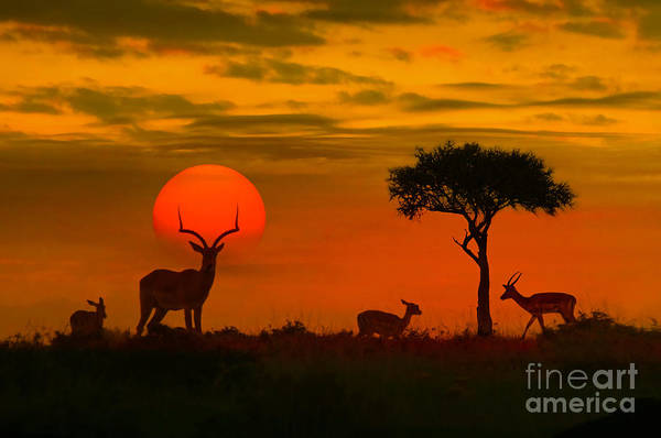 Wall Art - Photograph - African Sunset With Silhouette Of The by Byelikova Oksana