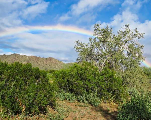 Photograph - After An Arizona Winter Rain by Judy Kennedy