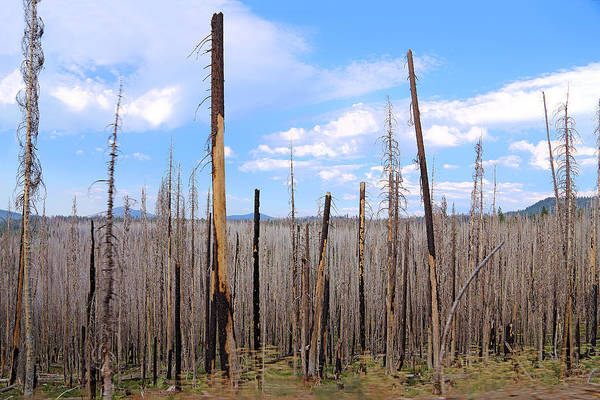 Photograph - After Fire In Lassen Volcanic Park by Viktor Savchenko