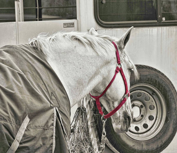 Photograph - After The Ride Rest by JAMART Photography