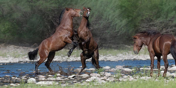 Heber Springs Photograph - Afternoon Stallion Spat. by Paul Martin