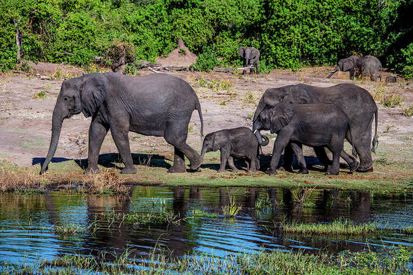Wall Art - Photograph - Afternoon Stroll Along The Chobe River by Marcy Wielfaert