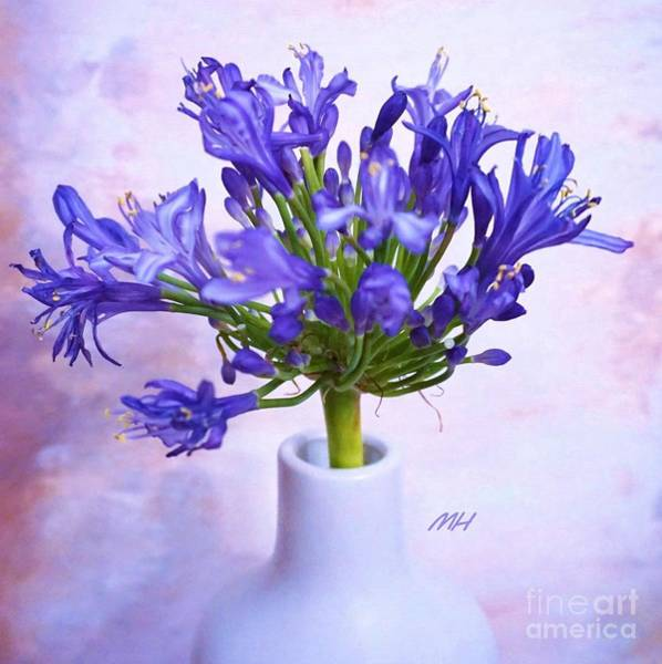 Wall Art - Photograph - Agapanthus Blooming by Marsha Heiken