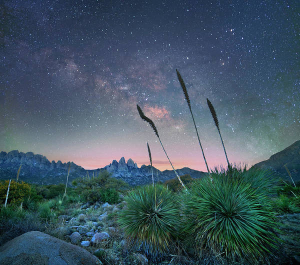 Photograph - Agave At Night, Organ Mountains-desert by