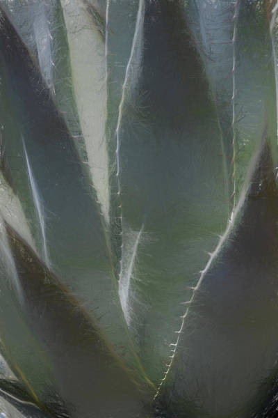 Wall Art - Photograph - Agave by Peter Tellone