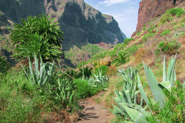 Photograph - Agaves In The Teno Massif by Sun Travels