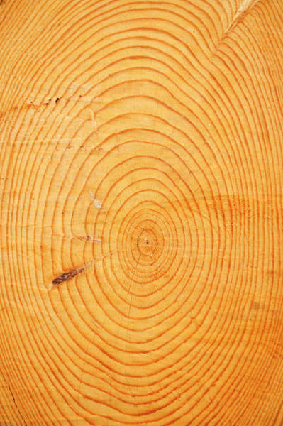 Time Frame Photograph - Age Rings In A Hardwood Tree Trunk by Tom Grill