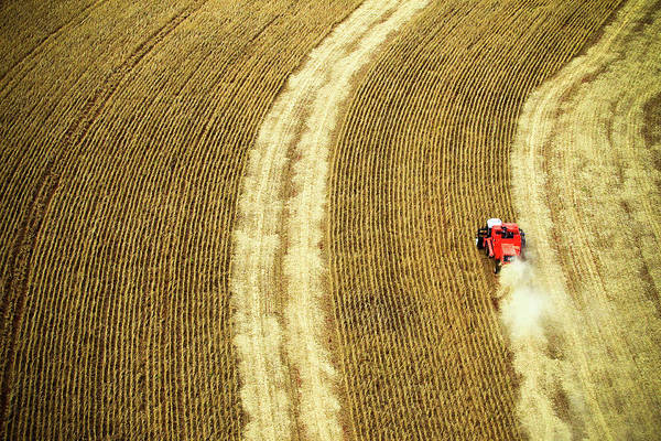 Dust Photograph - Agricultural Harvesting Maize by Marcos Alves