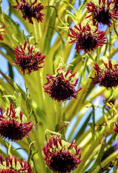 Photograph - Ahinahina Flowers by Anthony Jones