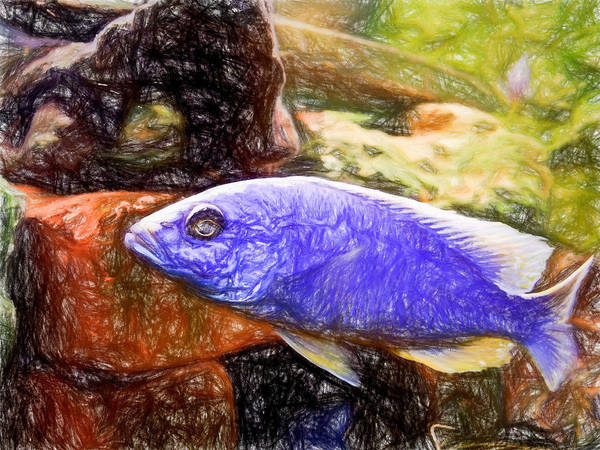 Digital Art - Ahli Colored Pencil by Don Northup