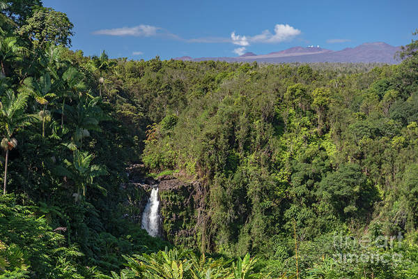 Photograph - Akaka Falls by Jim West