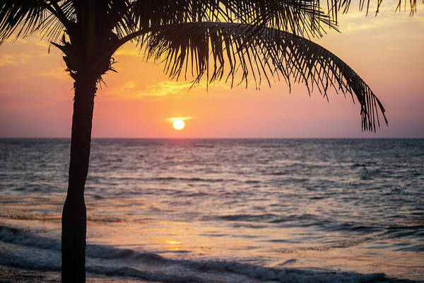 Wall Art - Photograph - Akumal Beach Palm Tree Sunrise Akumal Mexico by Toby McGuire