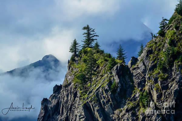 Wall Art - Photograph - Alaska Tree In The Clouds by Ann Loyd