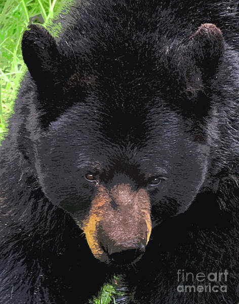 Wall Art - Digital Art - Alaskan Black Bear Head by Diane E Berry