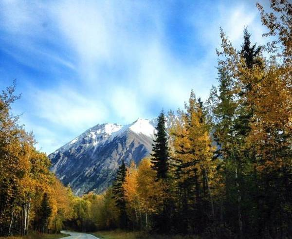 Photograph - Alaskan Highway In The Fall by Lynda Anne Williams
