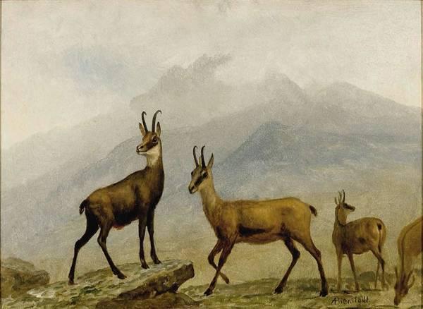 Black Buck Painting - Albert_bierstadt_-_chamois by Albert Bierstadt