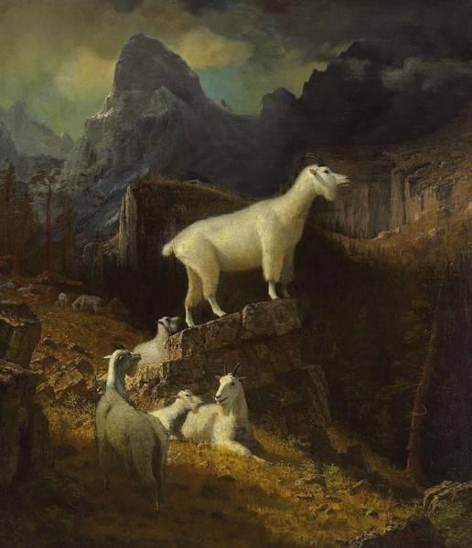Wall Art - Painting - Albert_bierstadt_-_rocky_mountain_goats by Albert Bierstadt