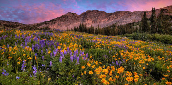 Photograph - Albion Wild Pano by Ryan Smith