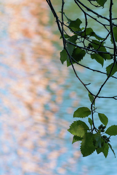 Photograph - Alder Reflections by Robert Potts
