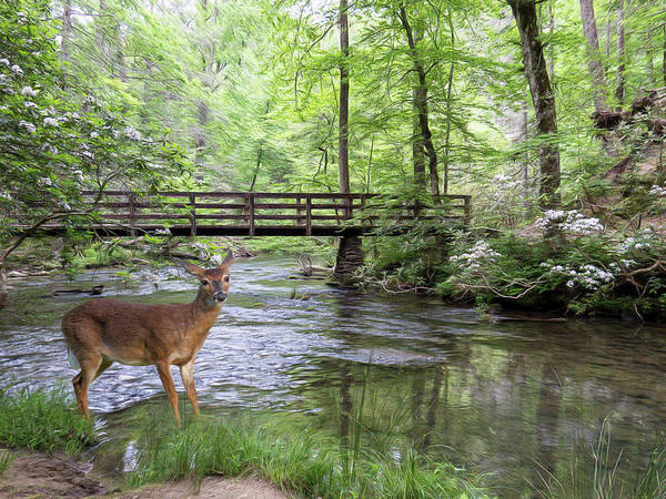 Photograph - Alert Deer By Bridge In Cades Cove by Patti Deters