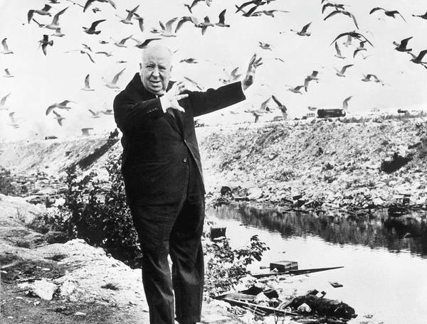 Photograph - Alfred Hitchcock Surrounded By Seagulls by Keystone-france