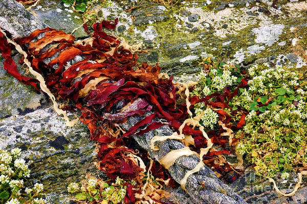 Wall Art - Photograph - Algae And Rope by Olivier Le Queinec