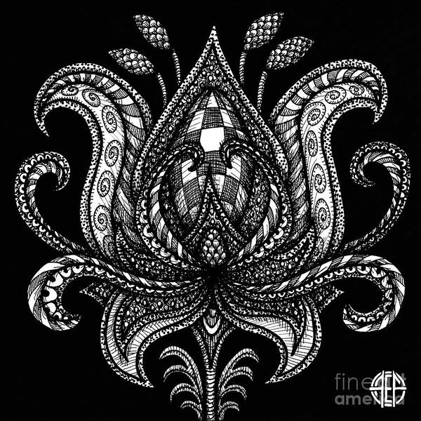 Drawing - Alien Bloom 28 Black And White by Amy E Fraser