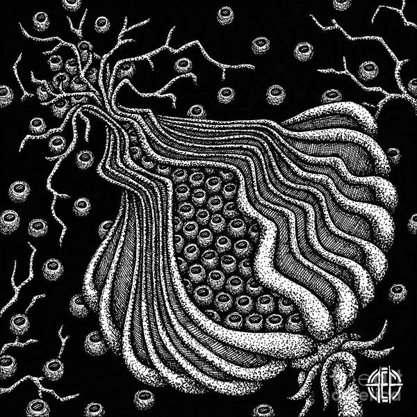Drawing - Alien Bloom 5 Black And White by Amy E Fraser