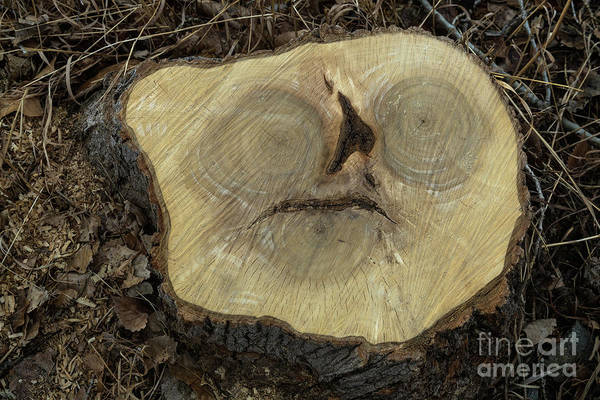 Photograph - Alien In A Tree Stump by James BO Insogna