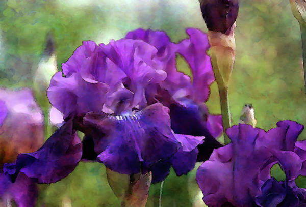 Photograph - All Purple 6814 Idp_2 by Steven Ward
