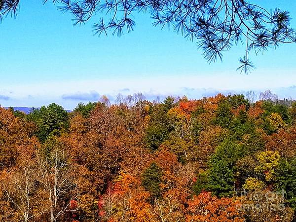 Photograph - All The Colors Of Fall by Rachel Hannah