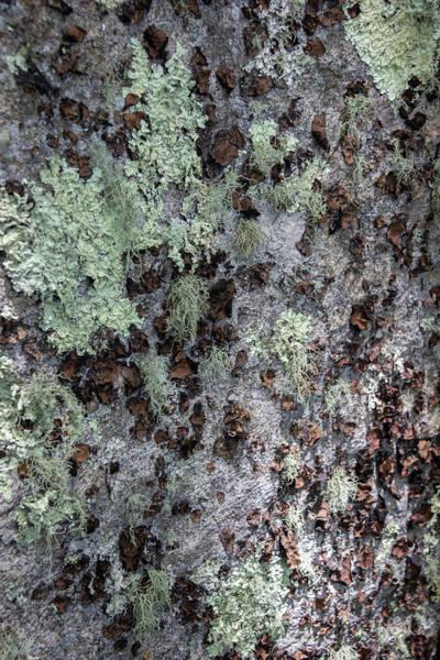 Wall Art - Photograph - All Things Lichen by Teresa Mucha