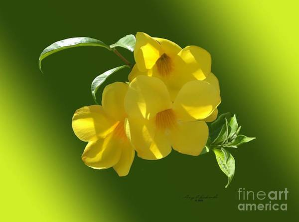 Yellow Trumpet Mixed Media - Allamanda Splendor by Gary F Richards