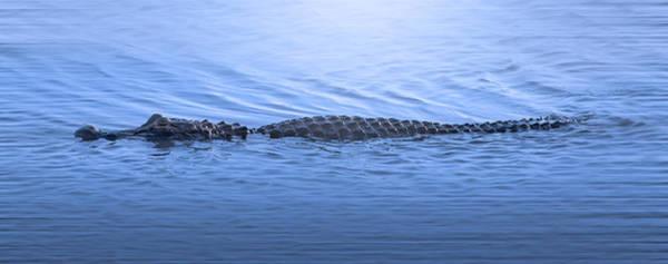 American Crocodile Photograph - Alligator Creek by Mark Andrew Thomas