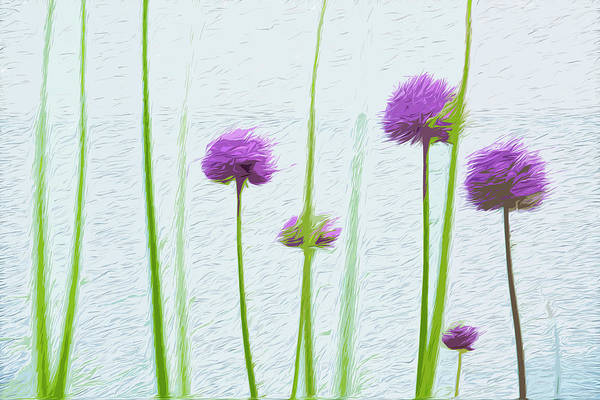 Digital Art - Allium Stand by Garden Gate magazine