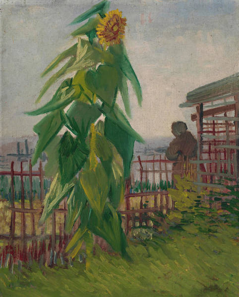 Rural Life Wall Art - Painting - Allotment With Sunflower by Vincent Van Gogh