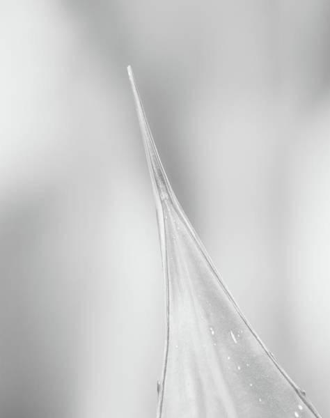 Photograph - Aloe Abstract 4288-101418-2cr-bw by Tam Ryan
