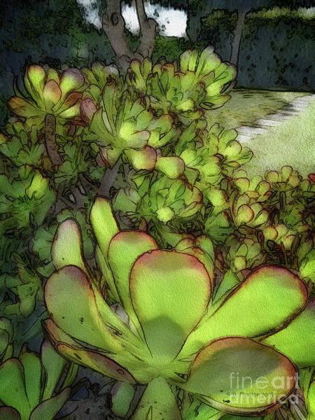 Digital Art - Aloe Succulent by Dee Flouton
