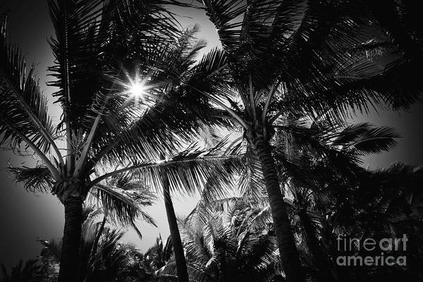 Wall Art - Photograph - Aloha Palms Maui by Sharon Mau