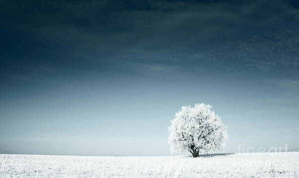 Wide Wall Art - Photograph - Alone Frozen Tree In Snowy Field And by Dudarev Mikhail