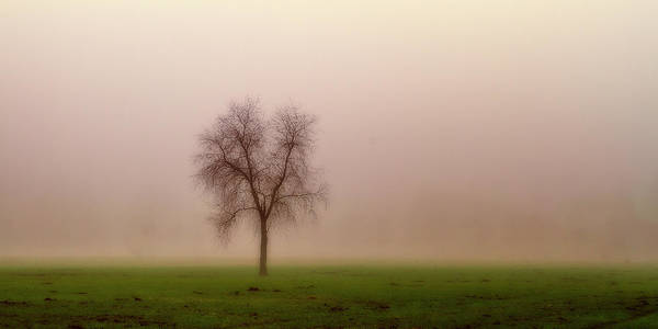 Photograph - Alone In The Fog by Roberto Pagani