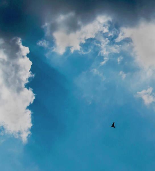 Photograph - Colours. Blue. Alone. by John Dakin